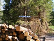 comertul-cu-lemn
